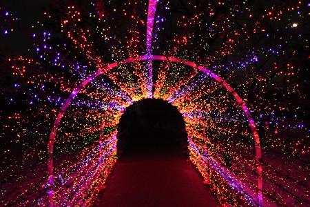 The Twinkling Tunnel of the Garden Glow invites visitors to take a stroll.
