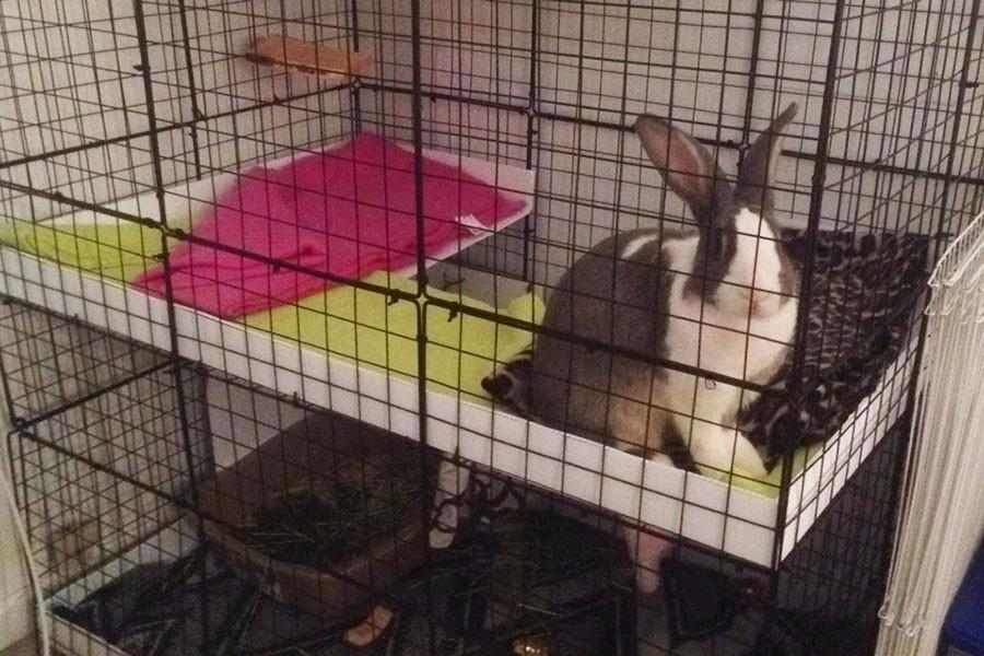You would not imagine how messy rabbits are. Nonetheless, I actually somewhat enjoy cleaning her cage every day. It satisfies me and makes Ashe happy!