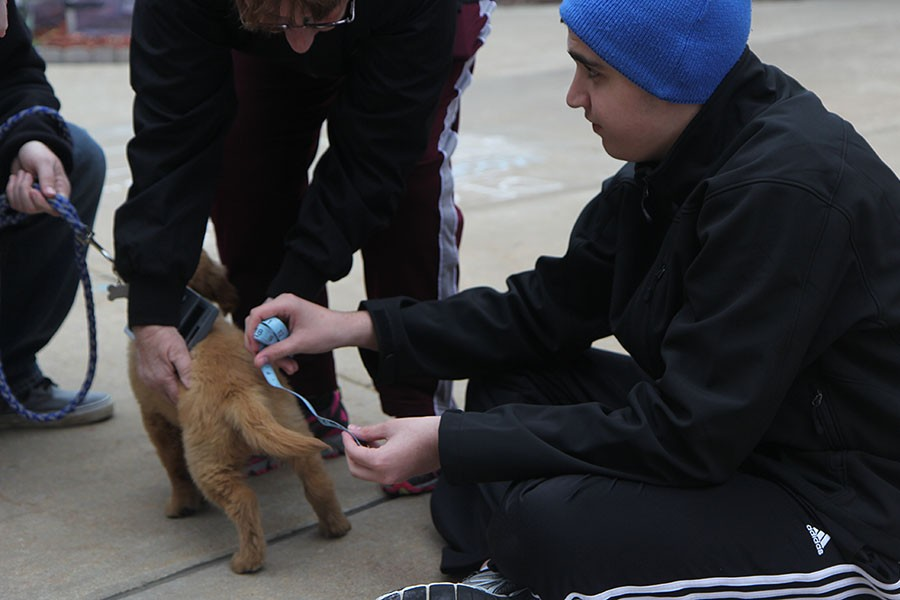 Students measure puppies for a math unit on graphing, March 28.