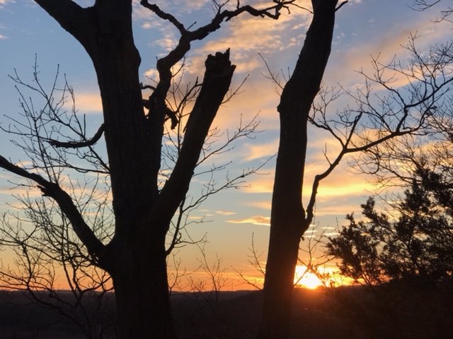 Capturing the sunset at Castlewood State Park through the trees, Feb. 22.