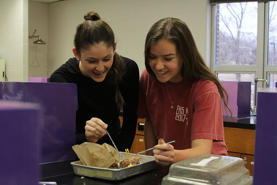 """Lab practical approaching, Victoria Penick and Grace Culbreath (11) review the brain structure of a pig in Keith Baremore's second hour Human Anatomy class, Feb.1. """"I want to be a radiologist when I am older, so human anatomy will come in handy,"""" Penick said. """"I will need to know bone structure and stuff that they teach us in this class. It is interesting to what it takes to understand the brain. The worst part is the memorization. There are a lot of terms, and it gets confusing."""""""